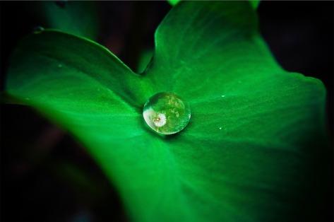 leaf-642115_1920